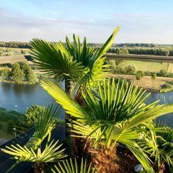 Palmen op dakterras